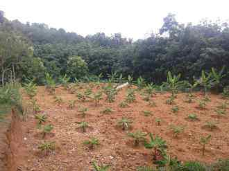 Residential Land for Sale in Kottayam, Changanassery, Koothrappally, Palamattam
