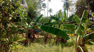 Commercial Land for Sale in Alleppey, Kuttanad, Nedumudi, Venattukadu