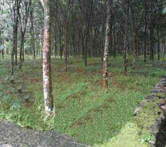Residential Land for Sale in Pathanamthitta, Omalloor, Omalloor, Vazhamuttom