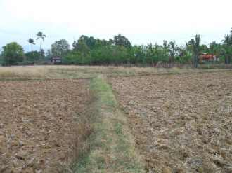 Agricultural Land for Sale in Palakad, Vadakkencherry, Vadakkencherry, at the side of Vadakkencherry-kizhakkencherry road,near to mosque at Chandappura