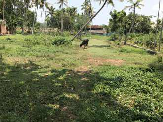 Residential Land for Sale in Kottayam, Kottayam, Divanpuram, Regi m road