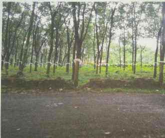 Agricultural Land for Sale in Kottayam, Erattupetta, Poonjar