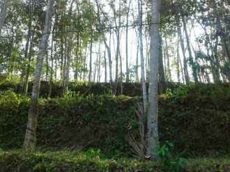 Agricultural Land for Sale in Pathanamthitta, Konni, Konni, koodal police station