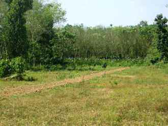 Residential Land for Sale in Kottayam, Pala, Lalam, Karoor Link Road