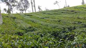 Agricultural Land for Sale in Idukki, Vagamon, Vagamon, Mottakkunnu