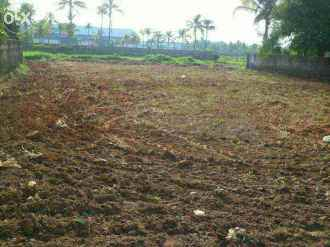 Residential Land for Sale in Ernakulam, Aluva, U C College, malikampeedika