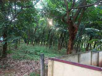Agricultural Land for Sale in Palakad, Palakkad, Akathethara, kurian Road, charad