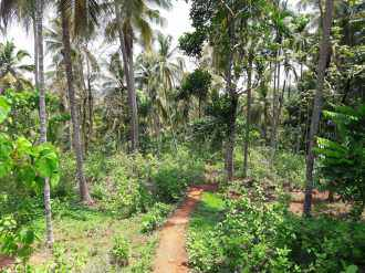 വാസയോഗ്യമായ ഭൂമി വില്പനയ്ക്ക്  Malappuram, Manjeri, Karakunnu, Thrikkalangode