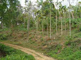 Agricultural Land for Sale in Kozhikode, Thiruvambadi, Kakkadampoil