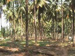 Agricultural Land for Sale in Palakad, Chittur, Muthalamada, Gandhi Ashram Road