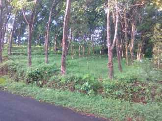 കൃഷി ഭൂമി വില്പനയ്ക്ക്  Kannur, Iritty, Angadikadavu, Angadikadavu