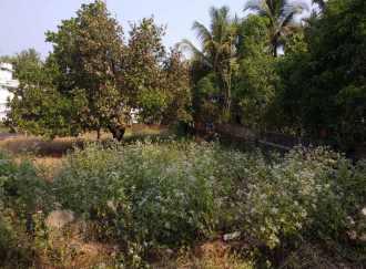 Residential Land for Sale in Kannur, Thaliparamba, Thaliparamba