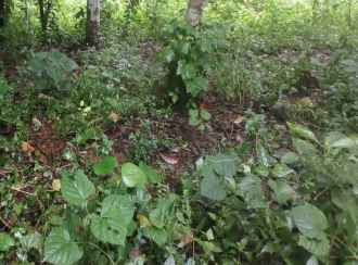 Residential Land for Sale in Kannur, Sreekandapuram, Chengalayi