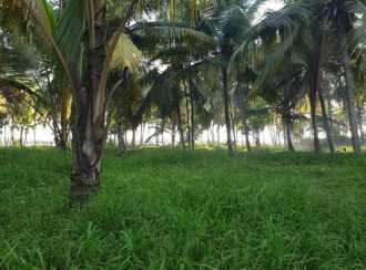 Residential Land for Sale in Kollam, Karunagapally, Ayanivelikulangara