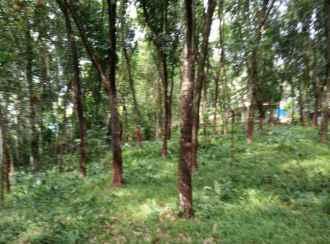 Agricultural Land for Sale in Ernakulam, Kothamangalam, Paingottoor