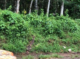 Commercial Land for Sale in Pathanamthitta, Konni, Konni