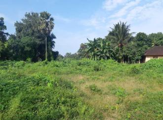 Residential Land for Sale in Palakkad, Chittur, Pallassana